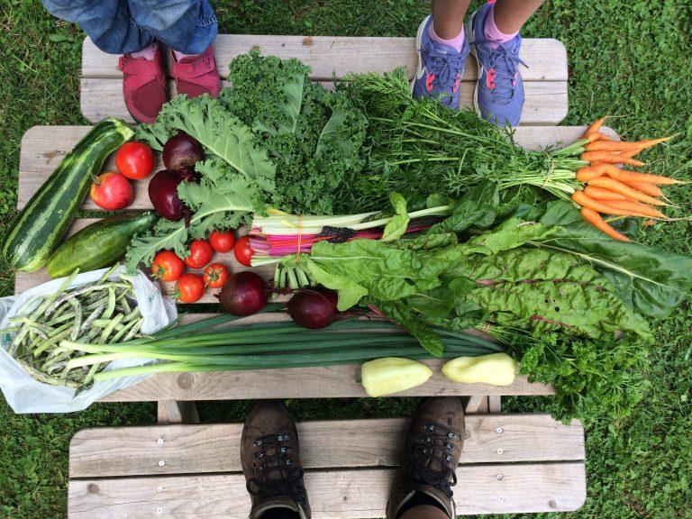 Inhalt einer sommerlichen Gemüse Kiste